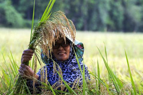 Kelantan Peruntuk RM350,000 Realisasi Jelapang Makanan Negara